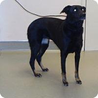 Adopt A Pet :: Nala - Wildomar, CA
