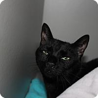 Adopt A Pet :: Crescent - Sarasota, FL