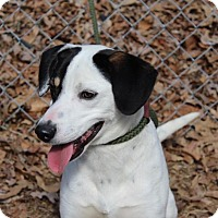Adopt A Pet :: Jack - Hagerstown, MD