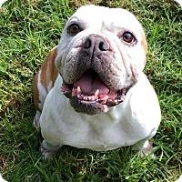 Adopt A Pet :: Journey - Santa Ana, CA