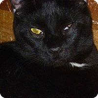Adopt A Pet :: Rowan - Hamburg, NY