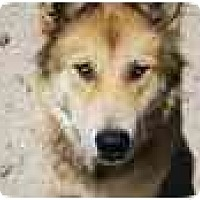 Adopt A Pet :: Starr - Thatcher, AZ
