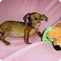 Adopt A Pet :: Grace - Mooy, AL