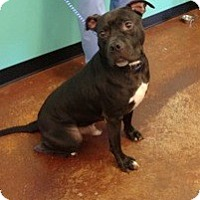 Adopt A Pet :: Angus - Courtesy Posting - Cheshire, CT