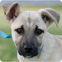 Adopt A Pet :: Maddox - kennebunkport, ME