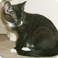 Adopt A Pet :: Ancil - North Highlands, CA