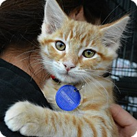 Adopt A Pet :: Jacque - Temecula, CA