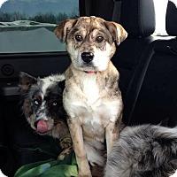 Adopt A Pet :: Nellie - Huntsville, TN