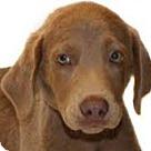 Adopt A Pet :: Jaksen