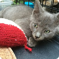 Adopt A Pet :: Mouse - Brooklyn, NY