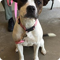 Adopt A Pet :: Zoe - Fredericksburg, VA