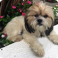 Adopt A Pet :: GLEE - Los Angeles, CA
