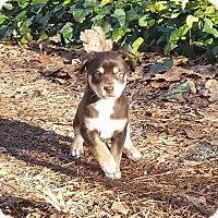 Adopt A Pet :: Versailles - Marietta, GA