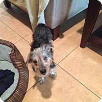 Adopt A Pet :: Lola - Clermont, FL