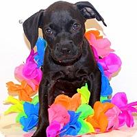 Adopt A Pet :: Poopsie - Glastonbury, CT