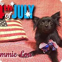 Adopt A Pet :: Emmie Lou - Dallas, TX