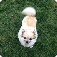 Adopt A Pet :: Pumpkin - Indianapolis, IN