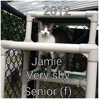 Domestic Shorthair Cat for adoption in Smithtown, New York - JAMIE