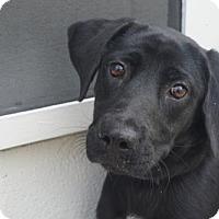 Adopt A Pet :: Poesie - Willingboro, NJ