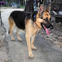 Adopt A Pet :: OZZY - SAN ANTONIO, TX