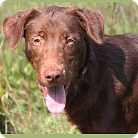 Adopt A Pet :: Charlie - South Bend, IN