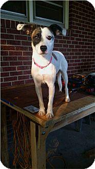 Spaniel (Unknown Type)/Terrier (Unknown Type, Medium) Mix Dog for adoption in Thomasville, North Carolina - Marcella