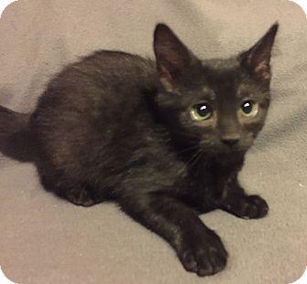 Hairless Cat Rescue Ontario