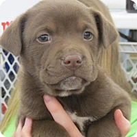 Adopt A Pet :: Salina - Rocky Mount, NC