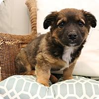 Adopt A Pet :: Spencer - Southington, CT