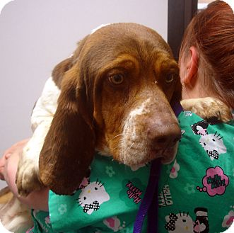 Basset Hound Mix Dog for adoption in baltimore, Maryland - Donald