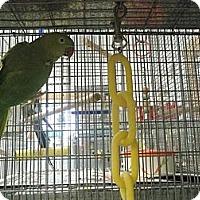 Adopt A Pet :: Minnie - Neenah, WI