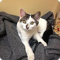 Adopt A Pet :: Sara - Armuchee, GA
