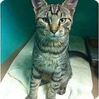Adopt A Pet :: Bruce - Secaucus, NJ