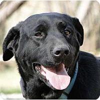 Adopt A Pet :: Jazz - Lewisville, IN