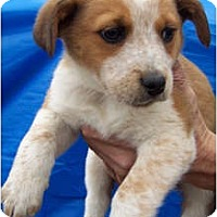 Adopt A Pet :: TYSON - Wakefield, RI