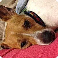 Adopt A Pet :: Brenin - Knoxville, TN