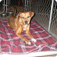 Adopt A Pet :: Lovee - Buchanan Dam, TX