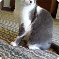 Adopt A Pet :: Leila - Syracuse, NY