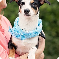 Adopt A Pet :: Jack Jack - Kingwood, TX