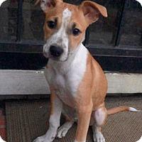 Adopt A Pet :: SARA - EDEN PRAIRIE, MN