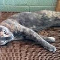 Adopt A Pet :: Blusher - Mission Viejo, CA