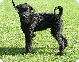 Spca Gatineau Dogs For Adoption