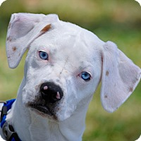 Adopt A Pet :: Zoe - Gainesville, FL