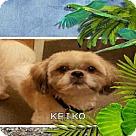 Adopt A Pet :: KEIKO