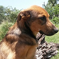 Adopt A Pet :: Conner - Leming, TX
