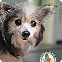 Adopt A Pet :: Shy - Oceanside, CA