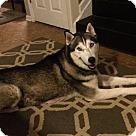 Adopt A Pet :: Ronon - Adoption Pending - Congrats Chris & Stacey