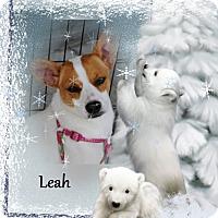 Adopt A Pet :: Leah - Crowley, LA