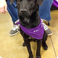 Adopt A Pet :: Taz - Olive Branch, MS