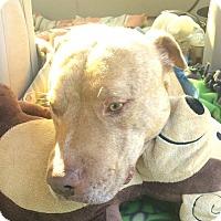 Adopt A Pet :: Leroy - Sacramento, CA